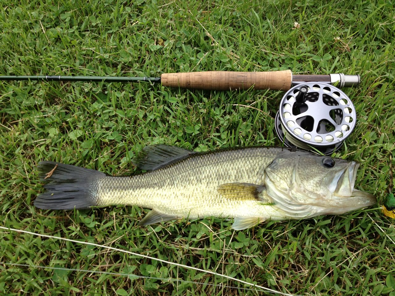 Fly fishing bass fly fishing for Bass fly fishing setup